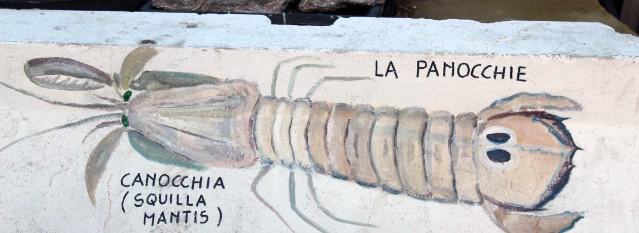 panocchia